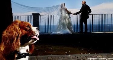 Matrimonio A Quattro Zampe
