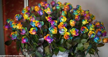Rose Multicolor