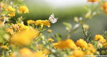 Primavera Lontana