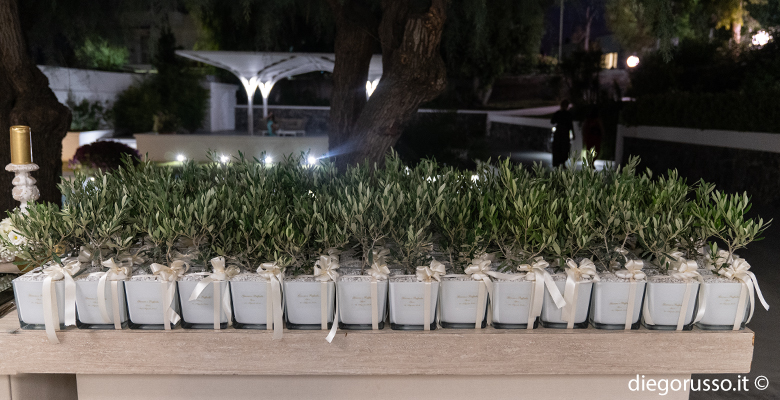 Bomboniera: albero di ulivo