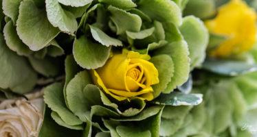 Rosa gialla per bouquet
